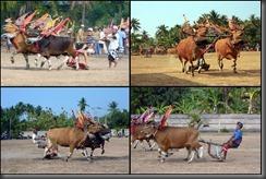 bulls collage