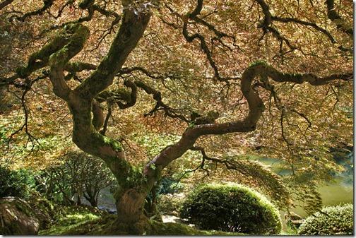 100726_Portland_Japanese_Garden_003