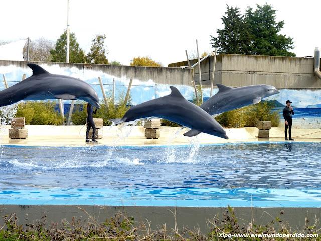 exhibixion-de-delfines-zoo-de-madrid.JPG