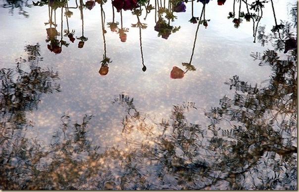 La beauté des reflets en photographie-013