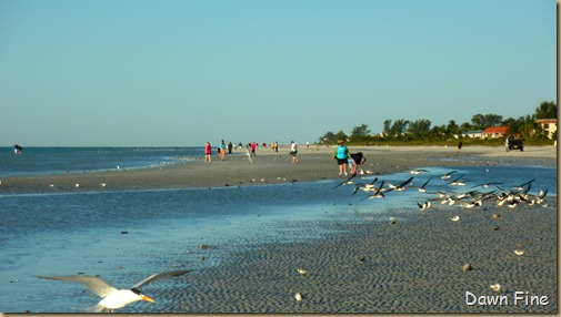 Sanibel Shell and birds_025