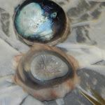 eye_cornea_tapetum.JPG