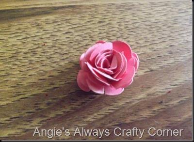 blog roses 014