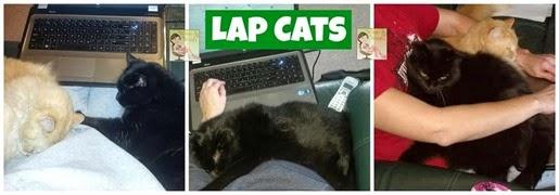 Lap Cats[4]