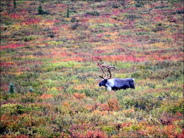2013_08_Alaska 1199