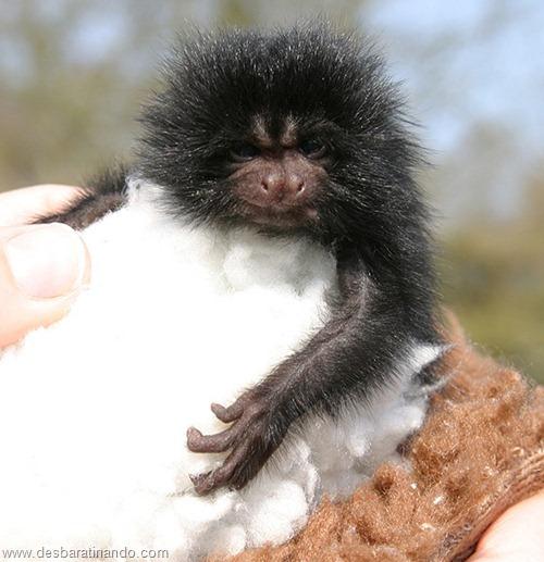 filhotes recem nascidos zoo zoologico desbaratinando animais lindos fofos  (22)