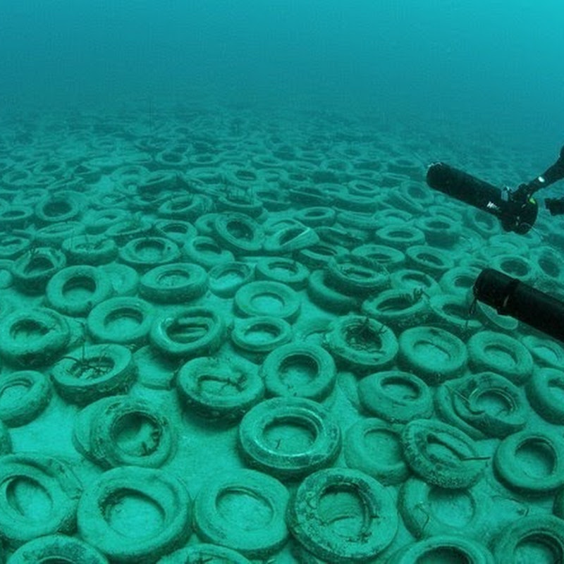 Osborne Reef: A Failed Artificial Reef of Discarded Tires
