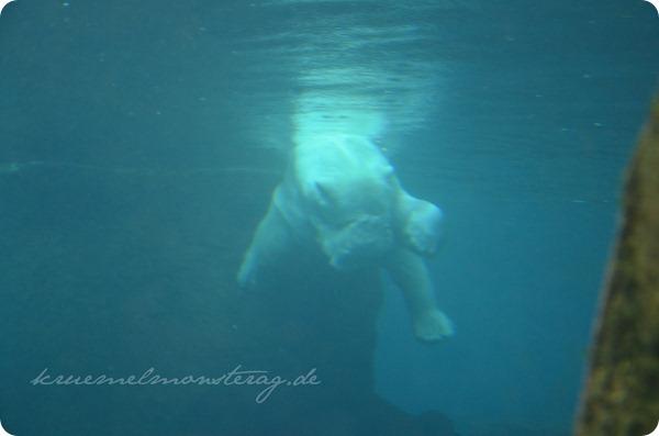 Wremen 20zwölf Tag 6 Zoo am Meer - Eisbär UW (4)