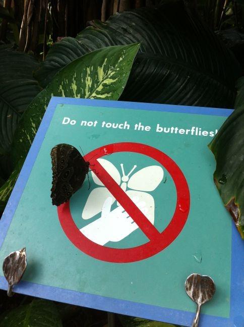 [1_butterflies%255B4%255D.jpg]