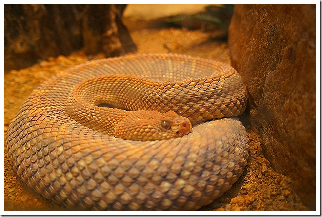 Public domain snake picture