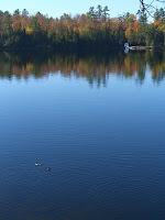 Canadiana Ducks.JPG