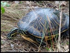 09 - Turtle