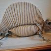 Skeleton of Animals at Harvard Museum of Natural History
