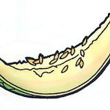 melón c.jpg
