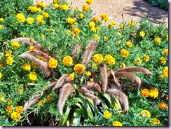 Marigolds with tails