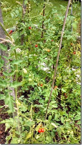Garden 07 (4)