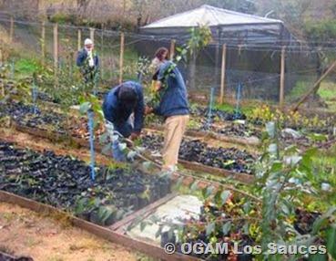 reforestacion keuke
