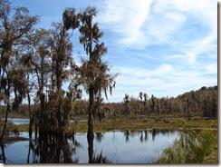 Marsh view DSC08755
