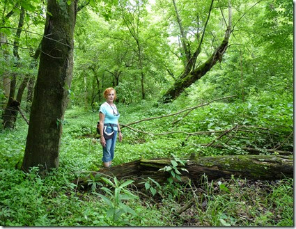 Zahorsky Woods MO