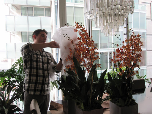 These arrangements are tall and will be perfectly displayed later in the evening on one of my longer tables in my living room.
