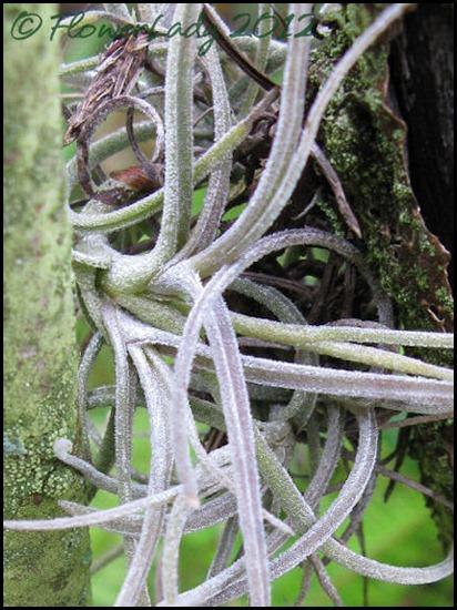02-09-epiphyte2