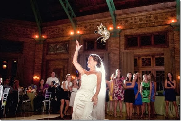 cat-toss-weddings-4