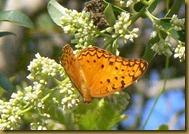 Butterfly in Zanzibar 4
