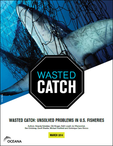 Cover of the Ocena report, 'Wasted Catch: Unsolved Problems in U.S. Fisheries'. According to some estimates, global bycatch may amount to 40 percent of the world's catch, totaling 63 billion pounds per year. In the United States, despite strong management measures and conservation initiatives in some regions, bycatch remains a persistent problem for far too many fisheries. Some fisheries discard more fish at sea than what they bring to port, in addition to injuring and killing thousands of whales, dolphins, seals, sea turtles, and sharks each year. Graphic: Oceana