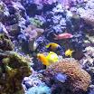 foto sea life (32).jpg