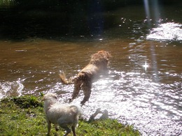 Dogs Trekking 4 (69)