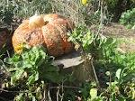 merritt_pumpkin.JPG