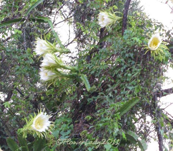 09-22-night-blm-cactus4