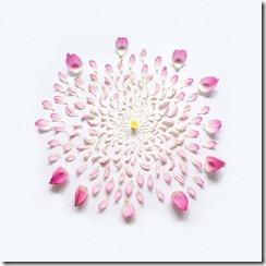 Imagens de rosas e flores