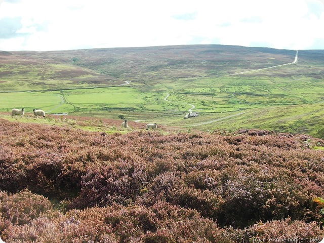 moors and sheeps