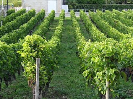 31. Podgorie Bordeaux.JPG