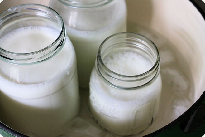 cool_milk_for_yogurt_recipe_homemade