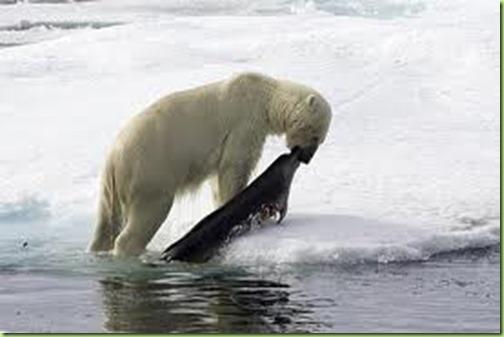 polar seal