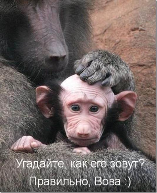 koto_22