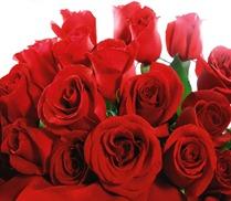 rosas-vermelhas