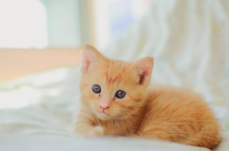 may kittens-19452