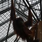 Heidelberger-Zoo_2012-04-09_794.JPG