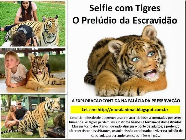 selfie-tigres