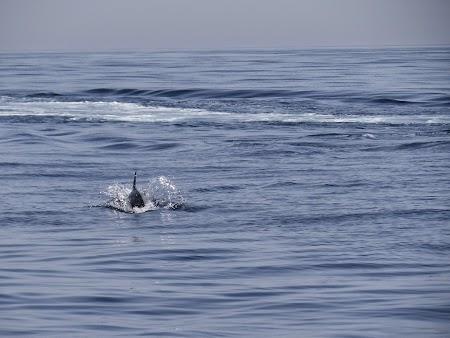 22. Delfini in Oman.JPG