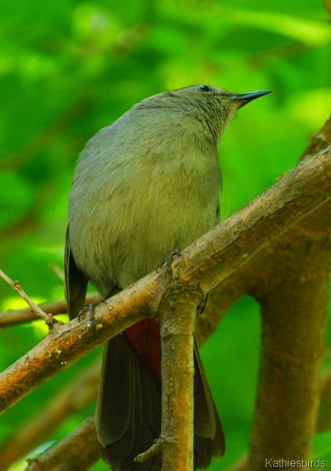 5-24-12 What bird-kab