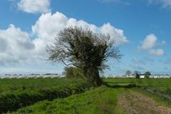 130511_Bognor trees 121 ecopy