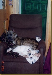 tess and derby3