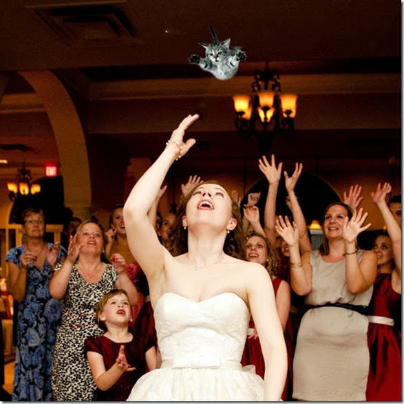 cat-toss-weddings-12