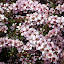Wildflowers at Vasse Felix - Margaret River, Australia
