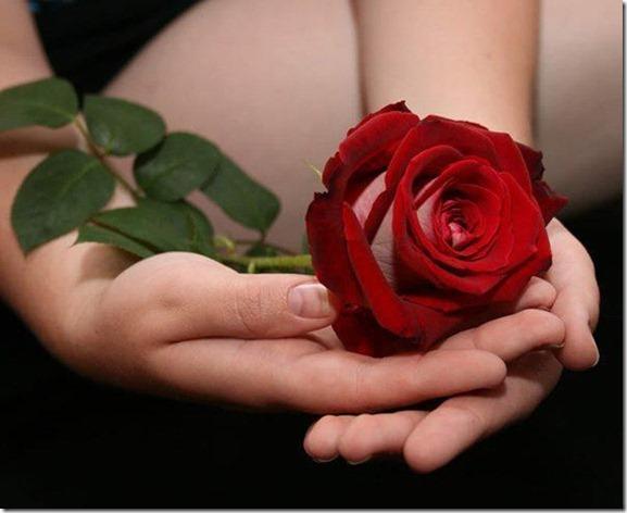 flores-facebook-tumblr-rosas-las flores-fotos de flores-767