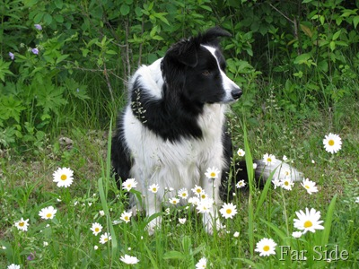 Chance in the daisys